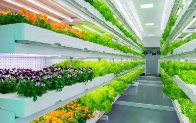 Indoor Farming Market