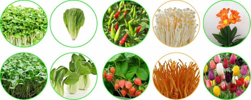 Smart In-Home Garden seeds